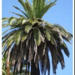 Palma 3